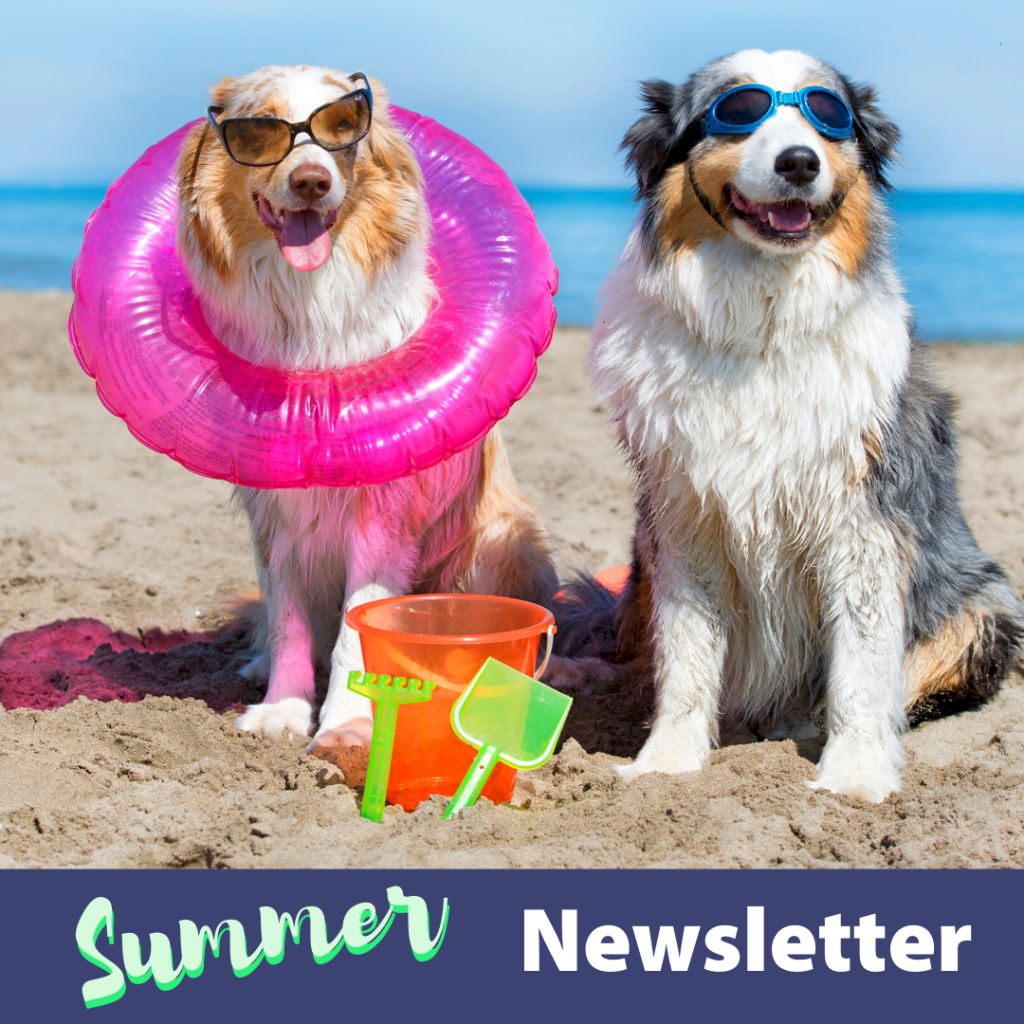 Caring Vets Summer Newsletter