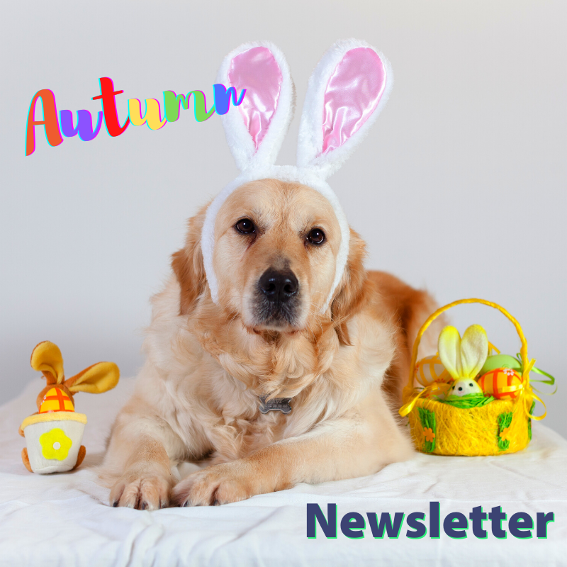 Caring Vets Autumn Newsletter